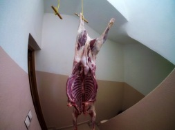 Just hangin.