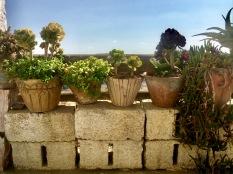 Grandma's plants.